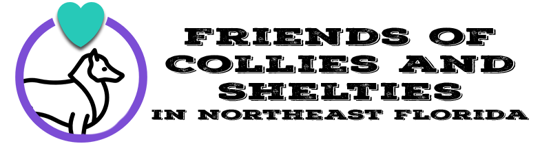 Friends of Collies and Shelties in Northeast Florida